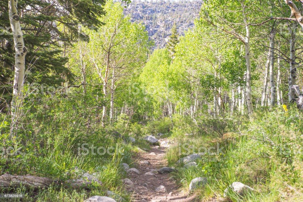 Sentier entouré d'arbres verts photo libre de droits