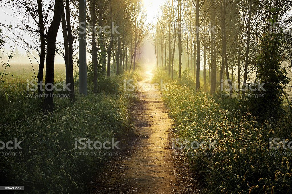 Trail surrounded by trees and fields in the sunset stock photo
