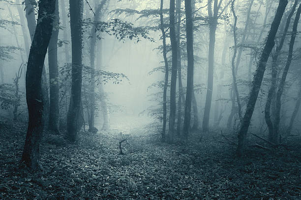 trail through a magic forest in fog with vintage toning - horror stock pictures, royalty-free photos & images