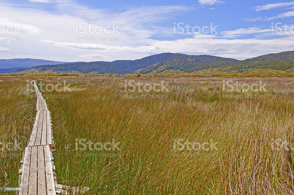 Trail through a natural Wetland stock photo