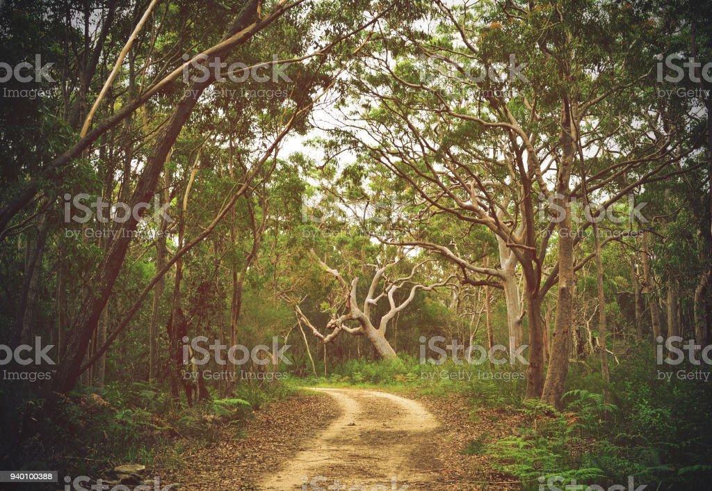 Trail through Angophora forest stock photo