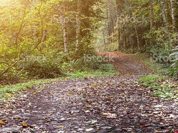 Photo of trail through autumn forest