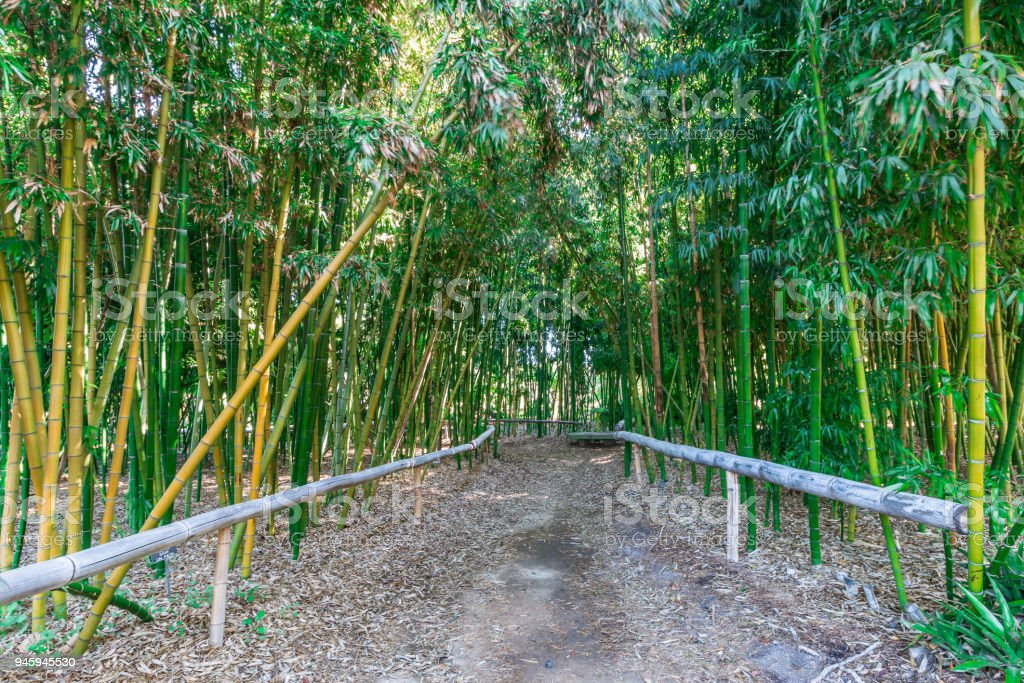 Trail Through Bamboo Forest stock photo