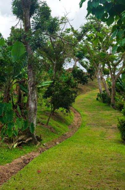 Trail Through Coffee Plantation stock photo