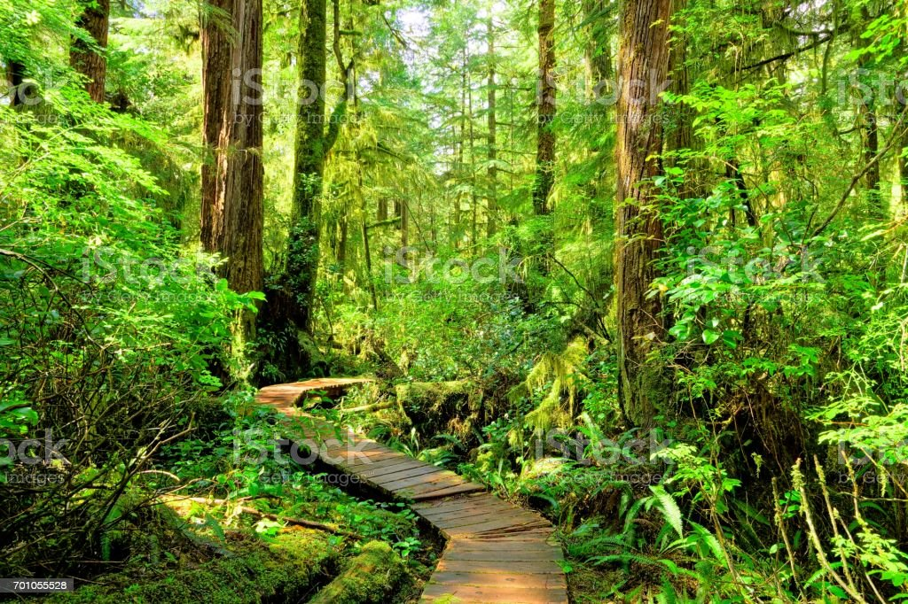 Trail through the rainforests of Pacific Rim National Park, Vancouver Island stock photo