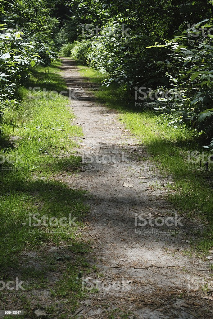 Trail Through Wooded Area royalty-free stock photo