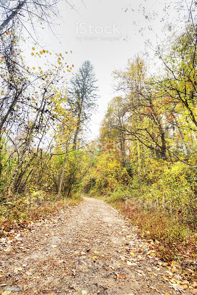 Trail Through Woods royalty-free stock photo