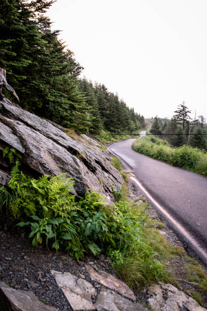 Trail to Clingmans Dome stock photo