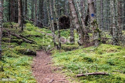 An overgrown track through densely growing fir forest to Gstoder near Seetal Krakau, Styria, Austria