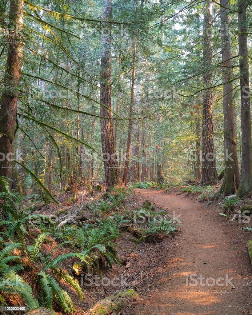 A trail winds through a forest in summer stock photo