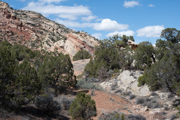 Trail with Monocline and junipers stock photo