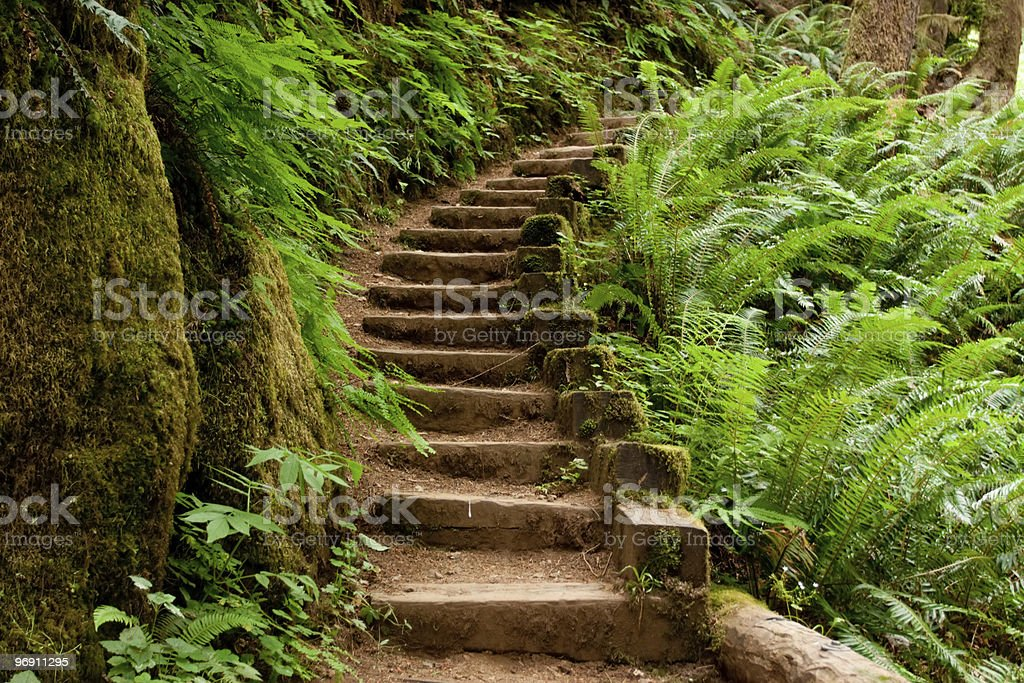 Trail with steps and lots of ferns along the side royalty-free stock photo