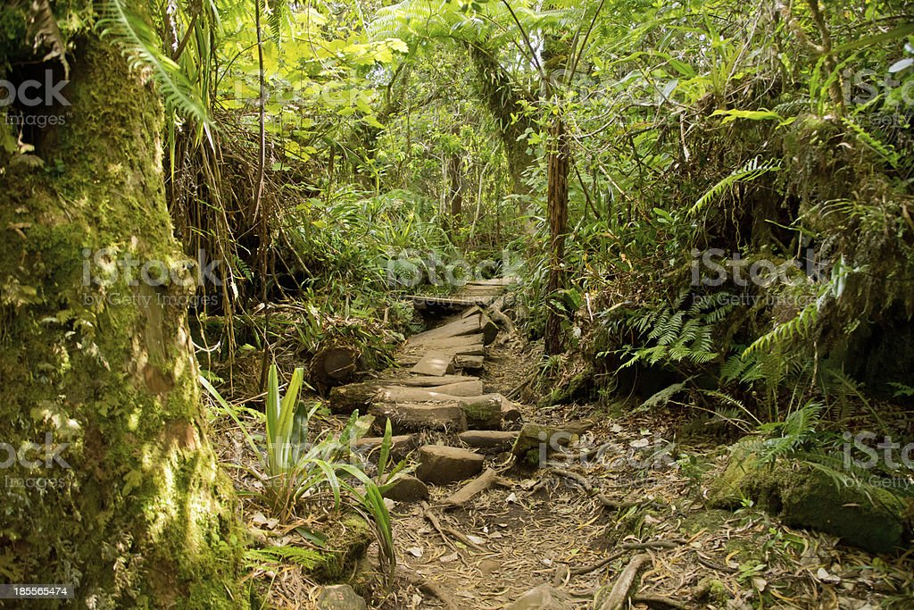trails in reunion stock photo