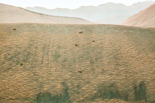 Trails of sheep in the mountains of Uzbekistan stock photo