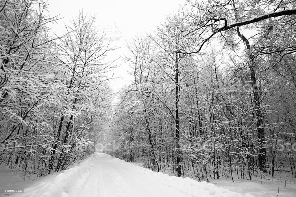Trailway in Winter Forest stock photo