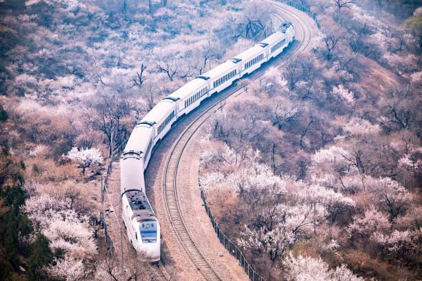 zug und sakura bäume in peking, china - hochgeschwindigkeitszug stock-fotos und bilder