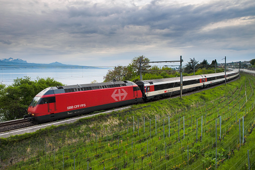 Train between vineyard and lake