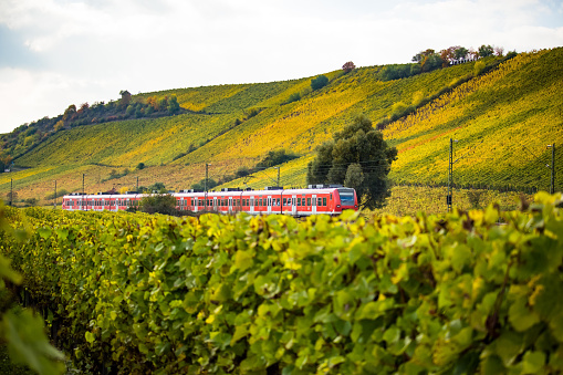 A train runs through autumnal vineyards