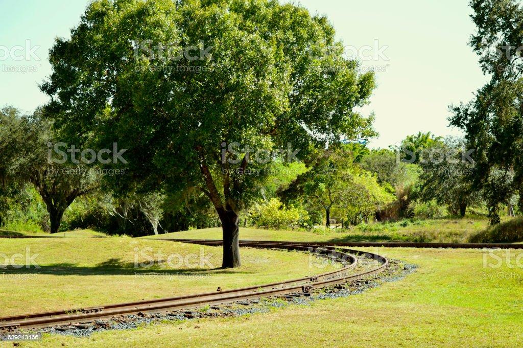 Train track around a tree stock photo