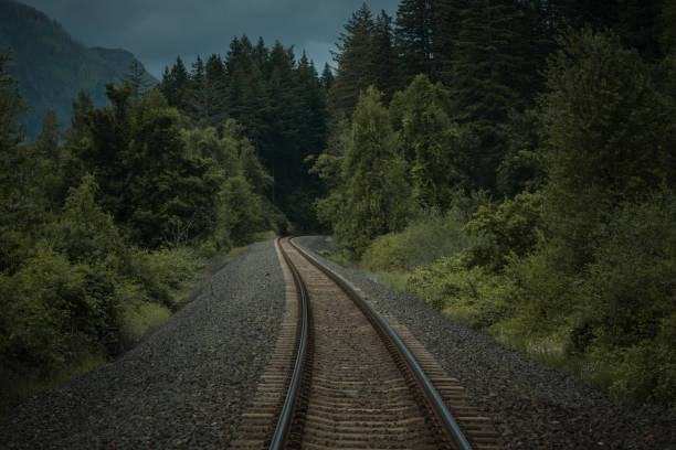 Train tracks through Pacific Northwest forest stock photo