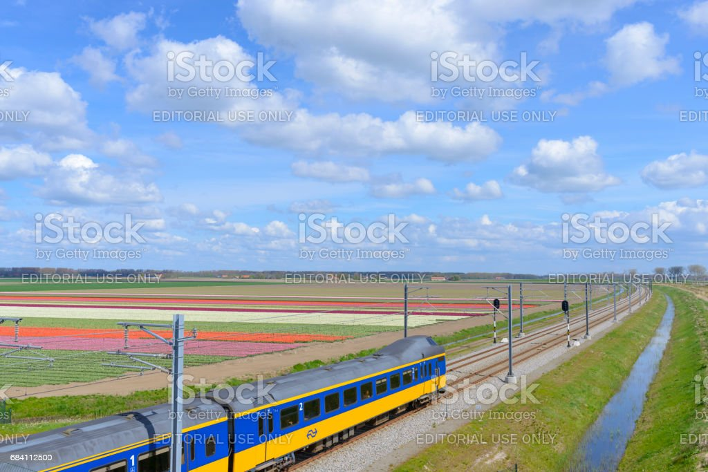 Train with Tulip fields on a beautiful spring day stock photo