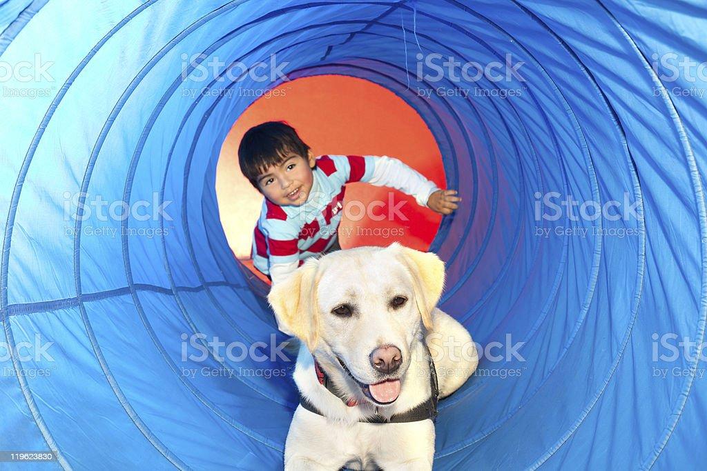 trained dog royalty-free stock photo
