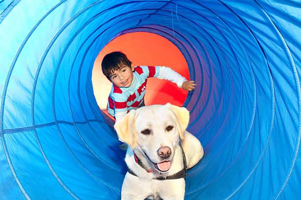 Trained dog picture id119623830?b=1&k=6&m=119623830&s=612x612&w=0&h=trehbzzawpwec7vxo5aylw5nqussxgcwaq enzlkl1c=