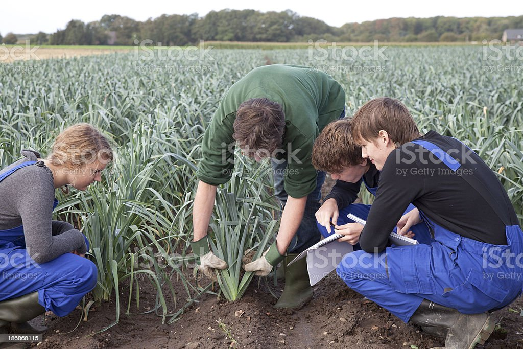 Trainee agriculture royalty-free stock photo