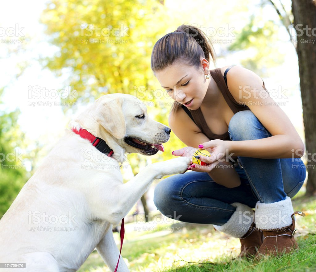 Training a dog royalty-free stock photo
