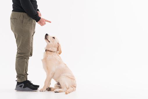 istock Training a golden retriever Puppy 1133038633