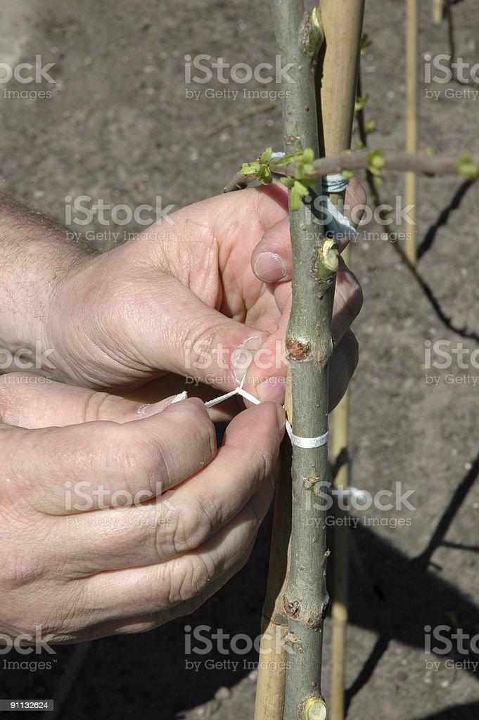 Training a Plant stock photo