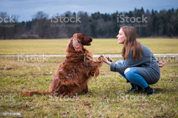 Training dog picture id1071519196?b=1&k=6&m=1071519196&s=612x612&h=d67osqsch79inctvl9fpvdw3jba7remlzfsocmsnyw8=