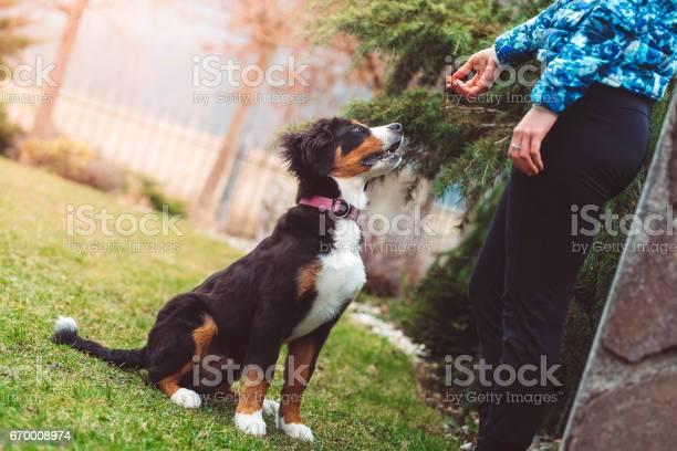 Training dog picture id670008974?b=1&k=6&m=670008974&s=612x612&h=k5bkt7alw1t4w5yufo1o2ytwgpitgdpn4itqliihomc=