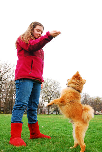 Training her dog A young girl uses hand signals to train her dog to walk on its hind legs dog training hand signals stock pictures, royalty-free photos & images