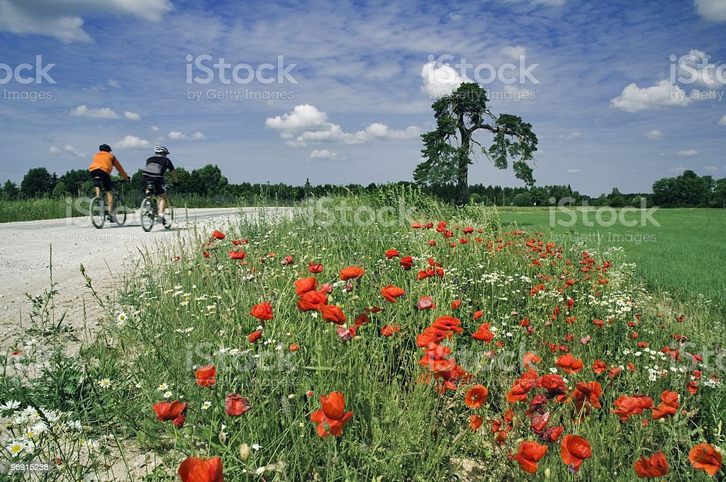 Training of bicyclists on beautiful road with a blossoming poppy. royalty-free stock photo