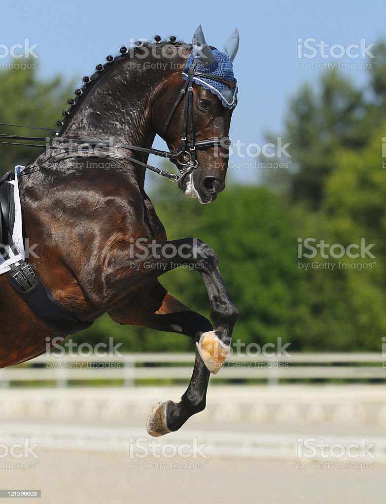 Dressage royalty-free stock photo
