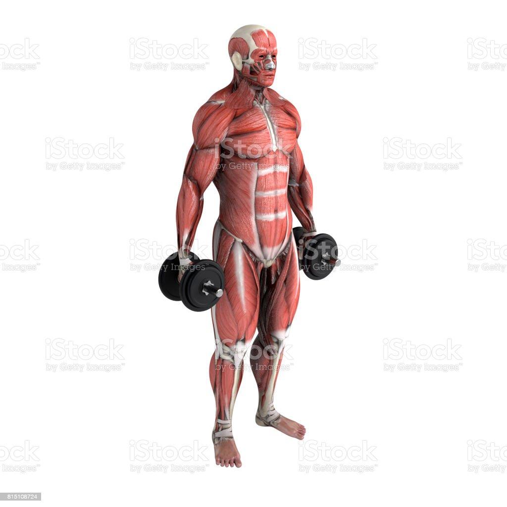 Training, workout stock photo