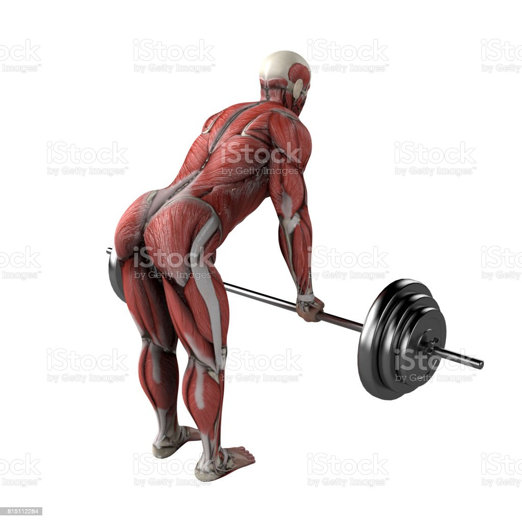 Training, workout stock photo