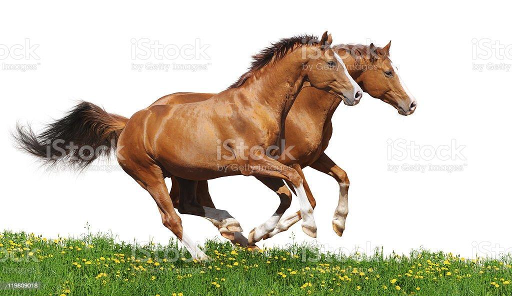 Traktor chelyabinsk stallions Galopp im Feld – Foto