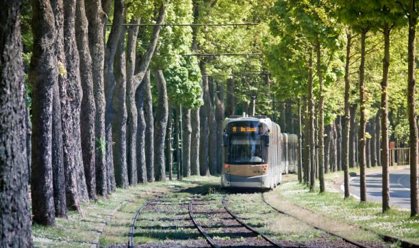 tram railroad in brussels. public transport of the belgian capital. tunnel of trees. - linea tranviaria foto e immagini stock