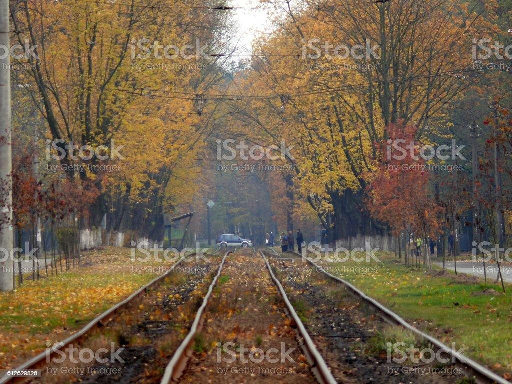 tram rails in autumn park стоковое фото
