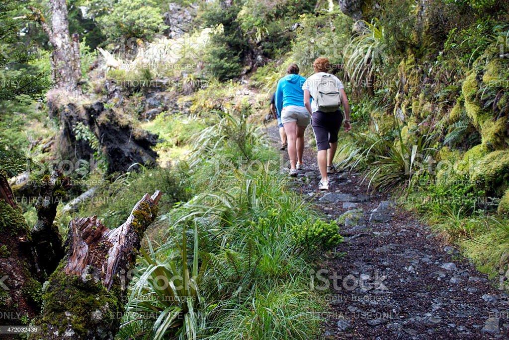 Trampers, Kahurangi National Park, New Zealand stock photo