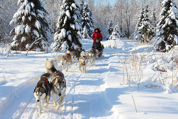 Traîneau à chiens Randonnée en traîneau à chiens sled dog stock pictures, royalty-free photos & images