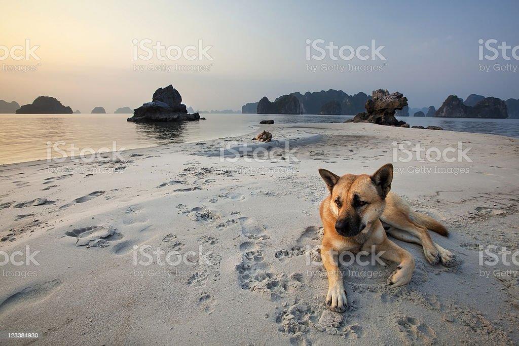 Tranquil Beach royalty-free stock photo