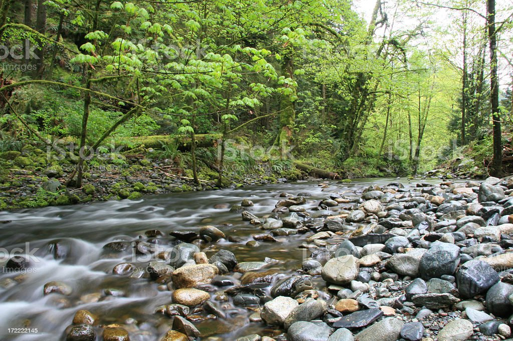Tranquil Creek Through Vancouver Island Forest royalty-free stock photo