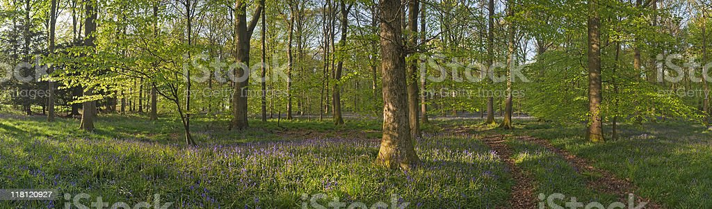 XXXL Tranquil forest and wild flowers royalty-free stock photo