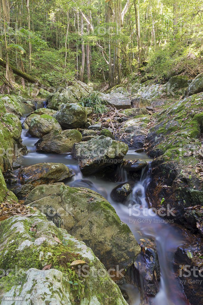 Tranquil Forest Creek royalty-free stock photo