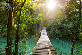 Discovery footbridge over river in tranquil forest