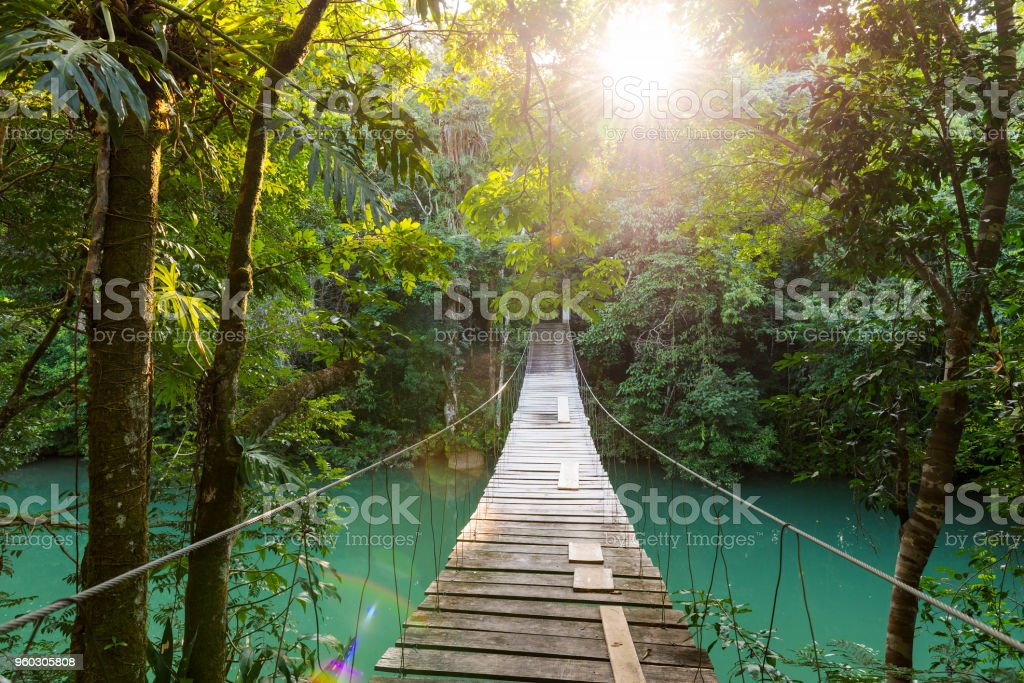 Tranquil Forest Footbridge stock photo