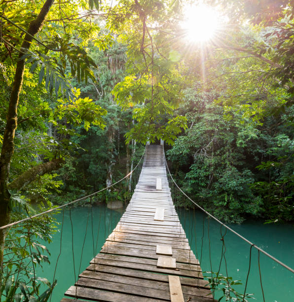 Tranquil Forest Footbridge stock photo